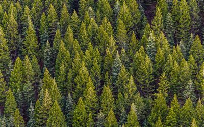 Sustainable afforestation: feasible or fallacious?