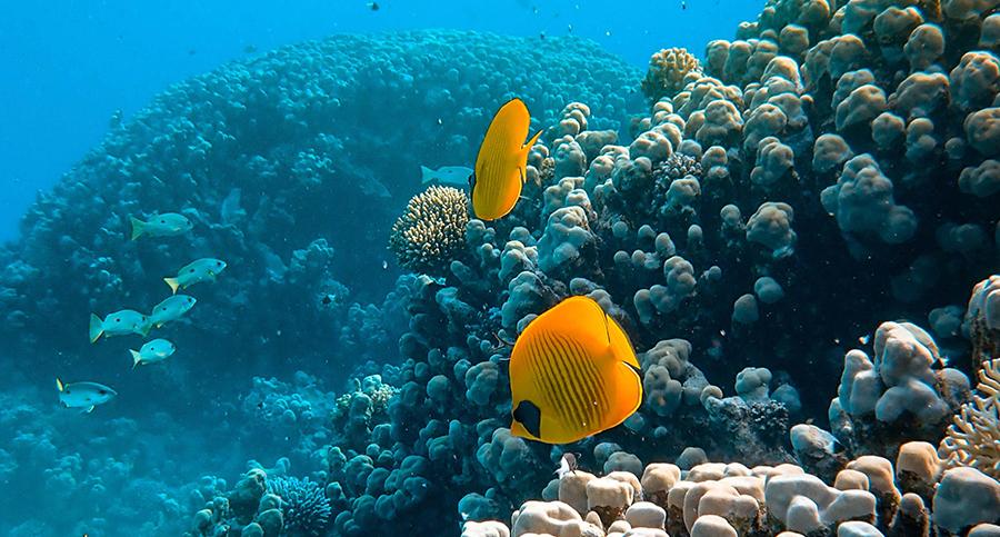 The effects of the coronavirus on marine life